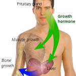 Human Growth Hormones HGH GenF20 Plus